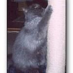 katt med klösbräda