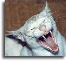 Kattskötsel Kattnu