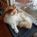 Fönsterbädd för katt med sugproppar