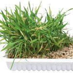 Kattgräs 100 g odlingskit