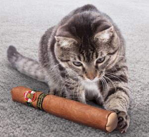 Kong Cat BetterBuzz Cigar