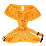 Kattsele Iris Orange S