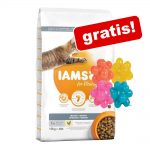 IAMS torrfoder 10 eller 15 kg +4 st noppbollar på köpet! Adult Chicken (10 kg)