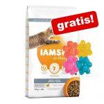 IAMS torrfoder 10 eller 15 kg +4 st noppbollar på köpet! Adult Indoor Chicken (10 kg)