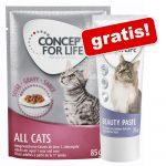 24 x 85 g Concept for Life våtfoder + 75 g Beauty Paste på köpet! - Light Cats i sås