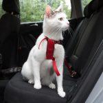 Trixie bilsele för katter - Röd