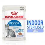 Royal Canin Indoor Sterilised gelé - 12 x 85 g